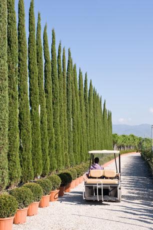 Vivai piante fratelli andreini a pistoia toscana italia for Vivai a pistoia